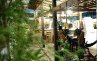 Wood Stone Hostel Yogyakarta, Review & Alamat Lengkap